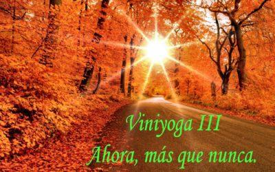 Viniyoga, ahora más que nunca.  III